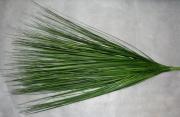Берграсс зелёный 60см